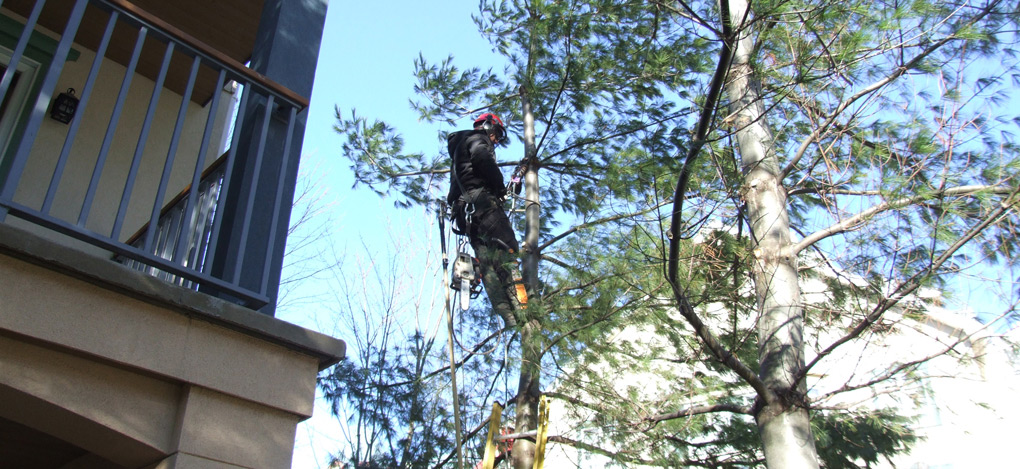 abattage arbre hydro